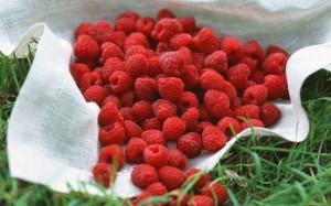 Food_raspberry_370935